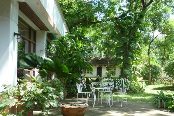 The Yoga Tree Chiang Mai